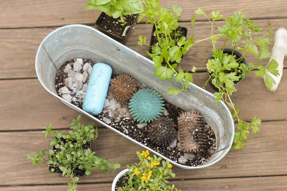 Retired Dog-toys in herb planter
