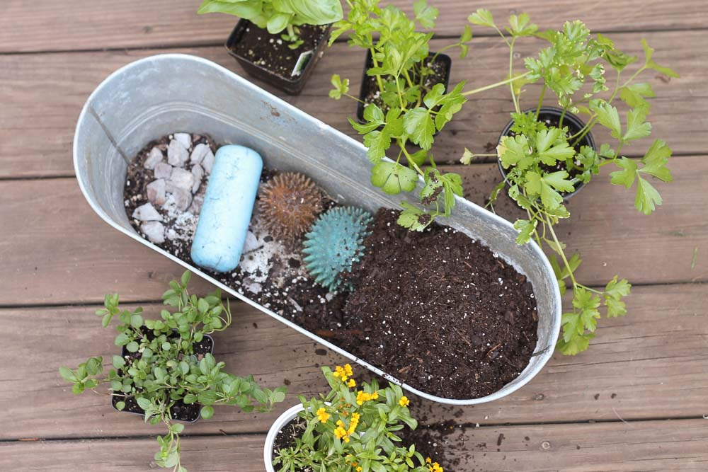 retired dog toys with soil on them in herb garden