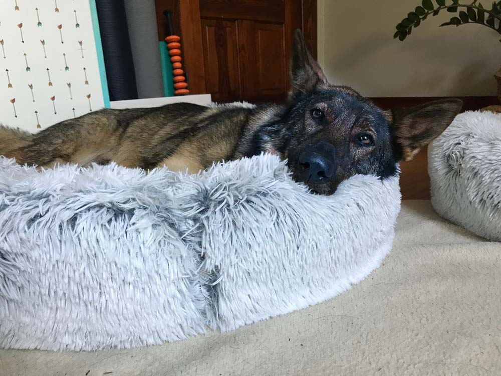 Review Suction Cup dog Toy